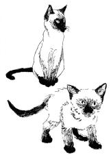 cats01